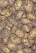 Kartoffeln 12,5kg-Beutel